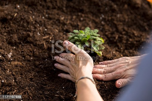 After setting a plant in the rich soil, an unrecognizable woman pats the soil down around the plant.
