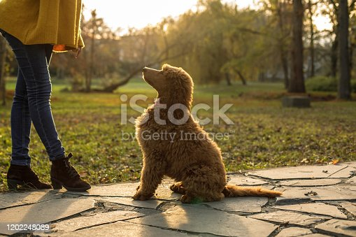 Lower section of unrecognizable young woman training her dog to do tricks and bonding with her while they are on a relaxing walk at the public park on a warm, sunny autumn day.