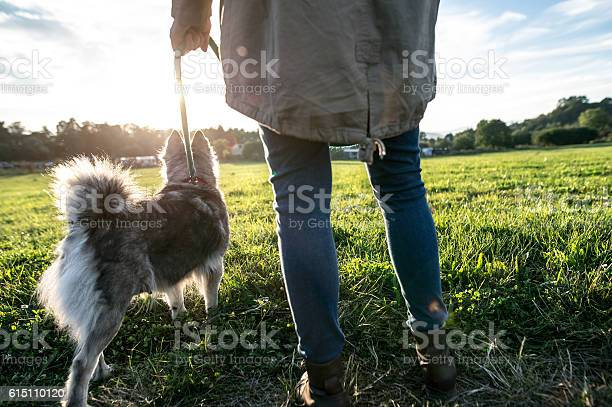 Unrecognizable young woman with dog in green sunny nature picture id615110120?b=1&k=6&m=615110120&s=612x612&h=ix2jvwj0kistsshsh9wtwpblpqtm8 qmamyfyybyyam=