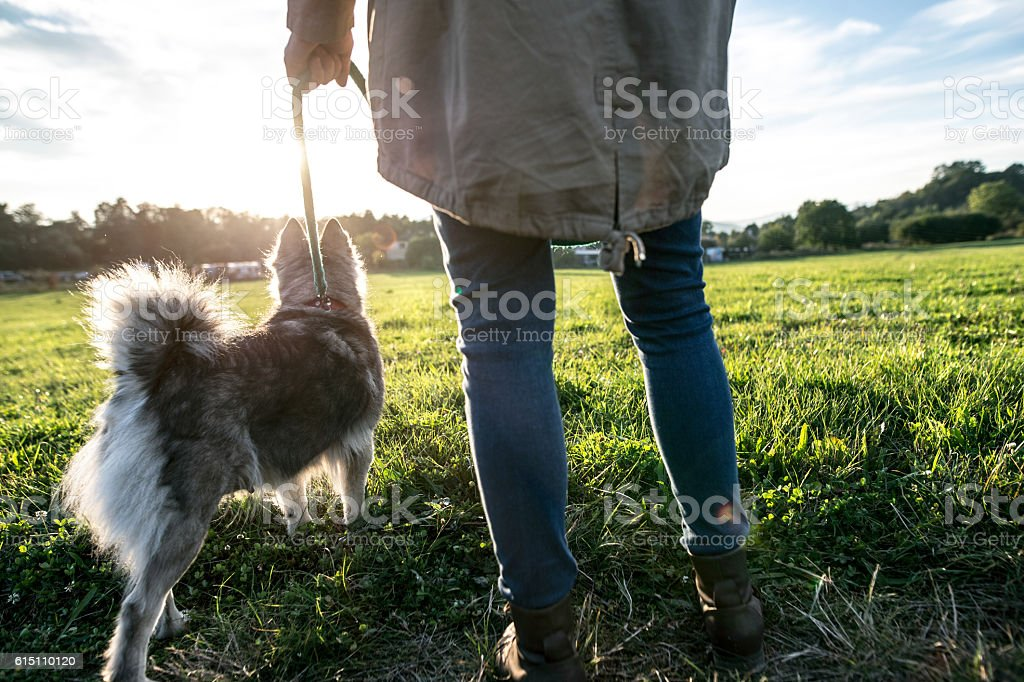 Unrecognizable young woman with dog in green sunny nature stock photo