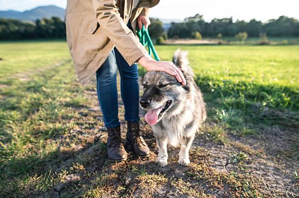 unrecognizable young woman with dog in green sunny nature - leinenhosen frauen stock-fotos und bilder