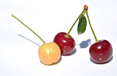 Cherries on white background. Two ripe and one unripe cherry. Racism and discrimination concept.