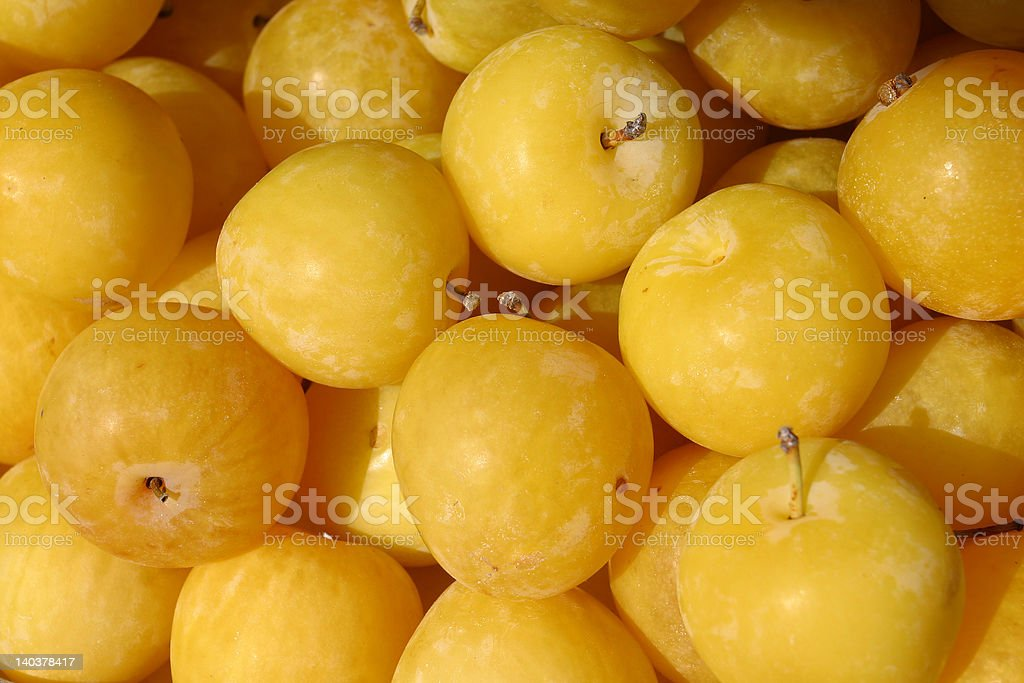 Unripe Plums royalty-free stock photo