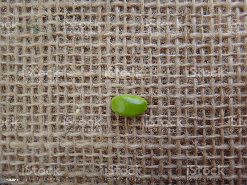Unripe seed of flower-fence stock photo