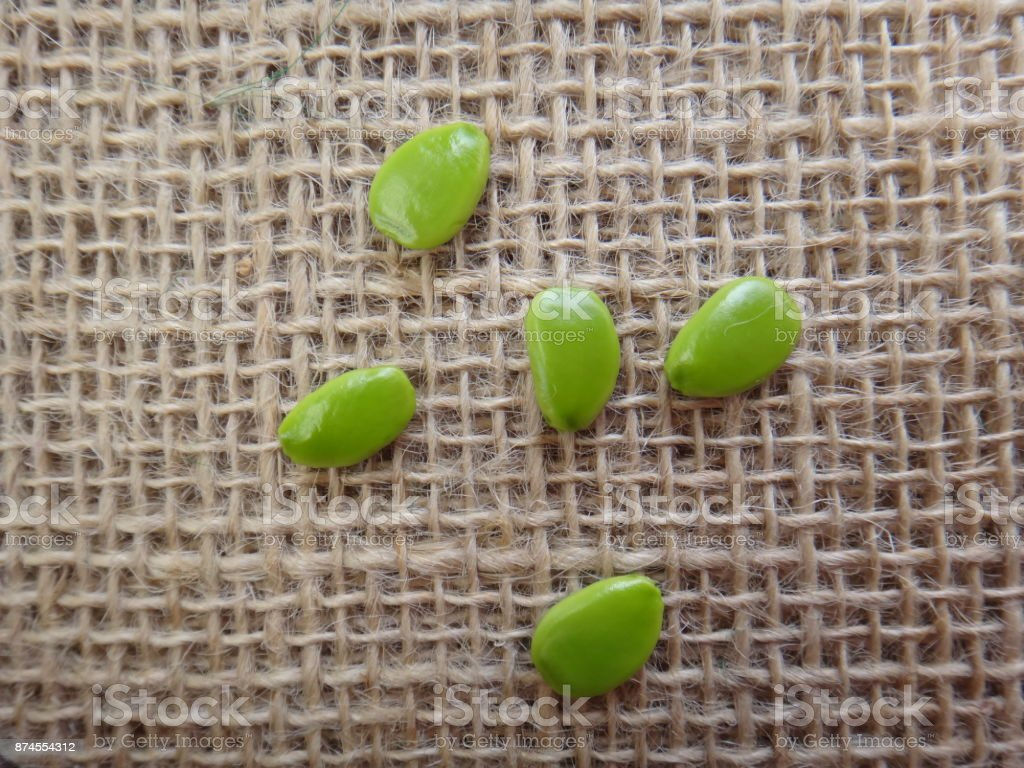 Unripe seeds of flower-fence stock photo