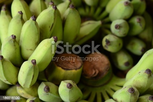 Unripe Thai Banana Stock Photo & More Pictures of Animal