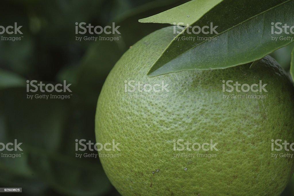 Unripened Orange royalty-free stock photo