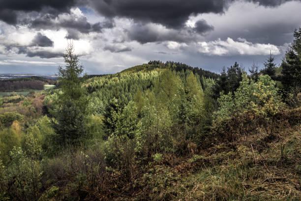 Unterwegs Im Wald – Foto