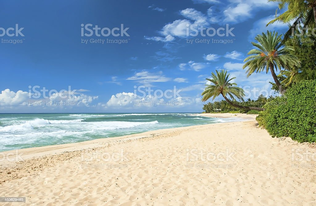 Untouched sandy beach with palms trees and azure ocean stock photo