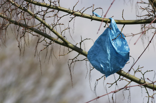 Blue plastic bag makes spring blossom