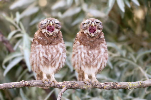 Unusual duo singing picture id826981996?b=1&k=6&m=826981996&s=612x612&w=0&h=gguyv hq2c5zfxw cbp4dkkl33vyesrv0o3 yfqwuro=