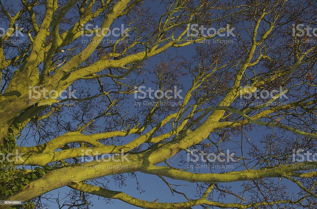 Unusual green tree stock photo