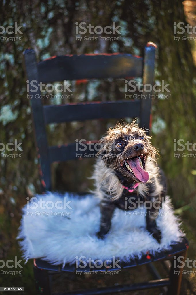 Unusual Mixed Breed Dog stock photo