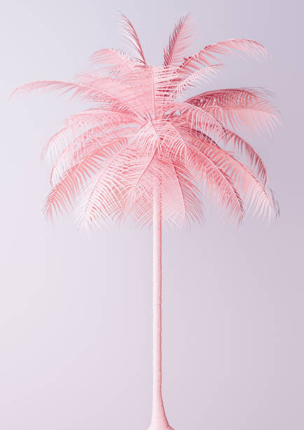 unusual pastel pink palm - illustrations stock photos and pictures