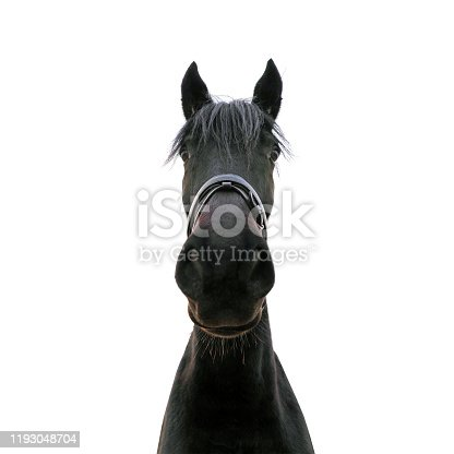 Unusual portrait of a black horse isolated on white background