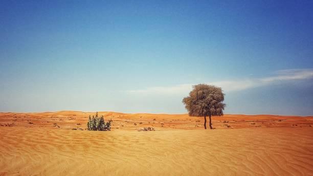 Ungewöhnlicher Baum in der Wüste – Foto