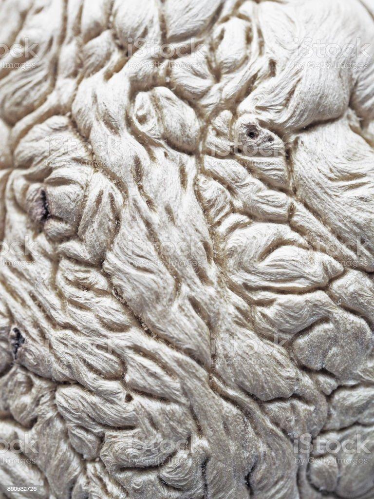 Unusual tree structure, fibers brain, interweaving rhizome stock photo