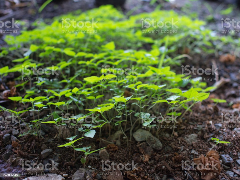 Unwanted Flora on The  Ground stock photo