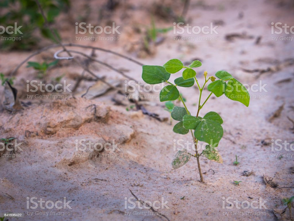 Unwanted Flora on The Soil stock photo