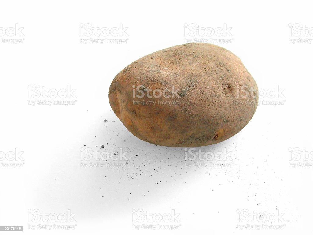 Unwashed potato royalty-free stock photo
