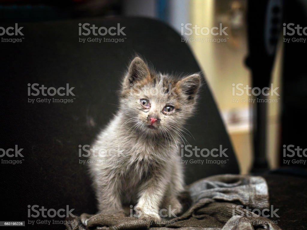 몸이 고양이 royalty-free 스톡 사진
