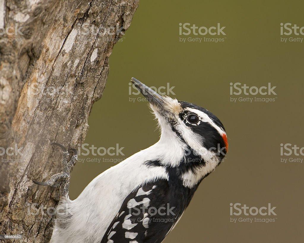 Up a Tree royalty-free stock photo