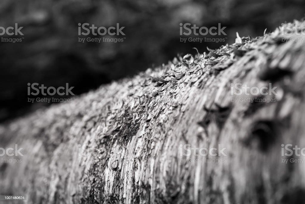 Up Close Birch stock photo