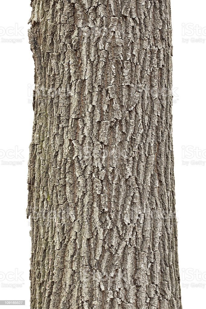 Up close photograph of a tree trunk on a white background stock photo