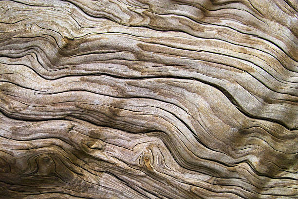 Up close view of a piece of driftwood Detailshot of weathered driftwood, found on the beach driftwood stock pictures, royalty-free photos & images