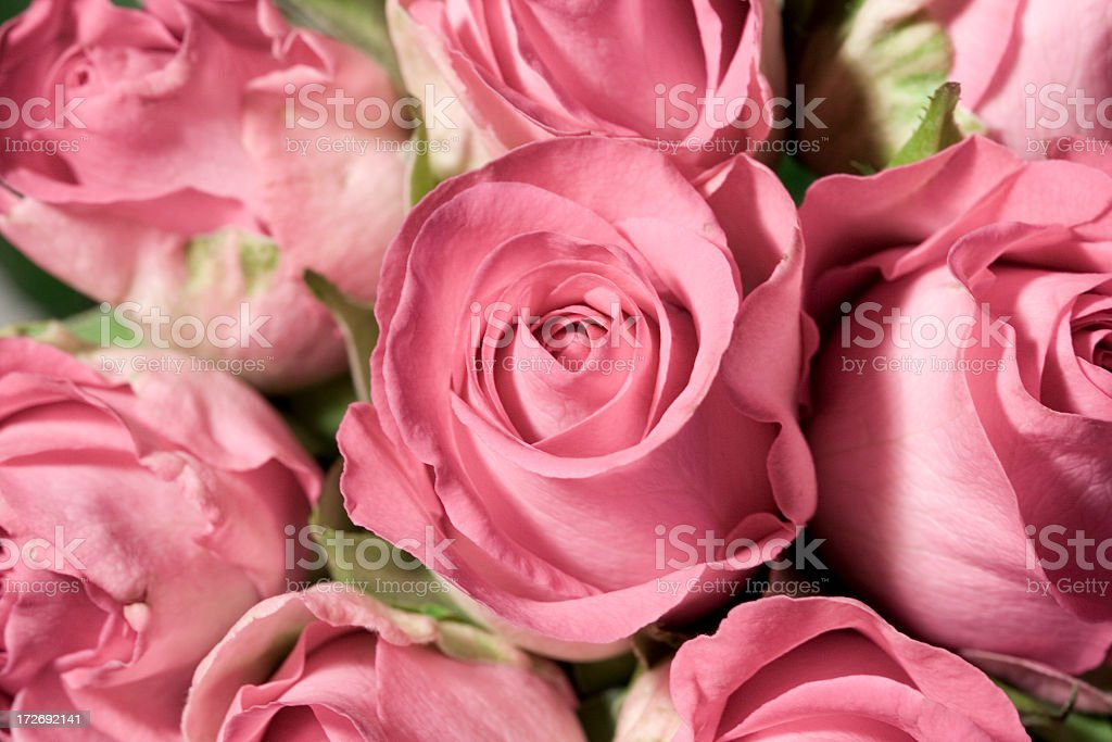Up close view of beautiful pink roses royalty-free stock photo