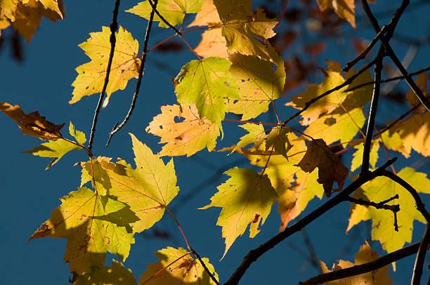 Upclose of Fall Foliage in Virginia stock photo
