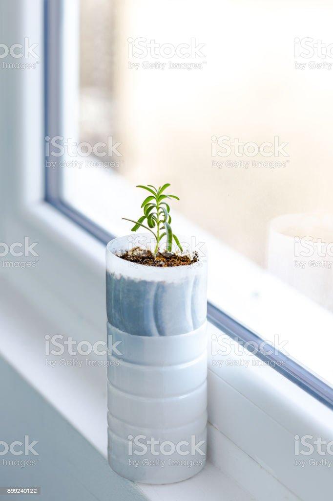 Upcycled plastic pot stock photo
