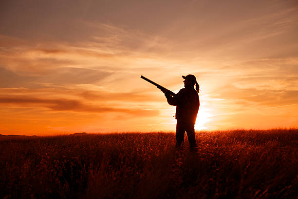Upland Bird Hunter at Sunset a woman upland bird hunter with shotgun silhouetted at sunset bird hunting stock pictures, royalty-free photos & images