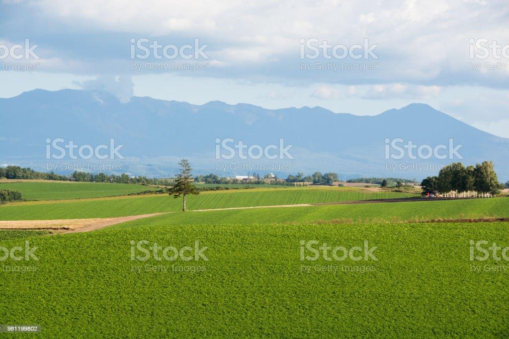 Upland field of Hokkaido stock photo