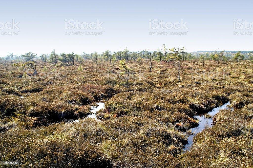 Upland moor royalty-free stock photo