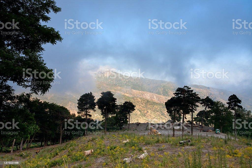 upland pasture royalty-free stock photo