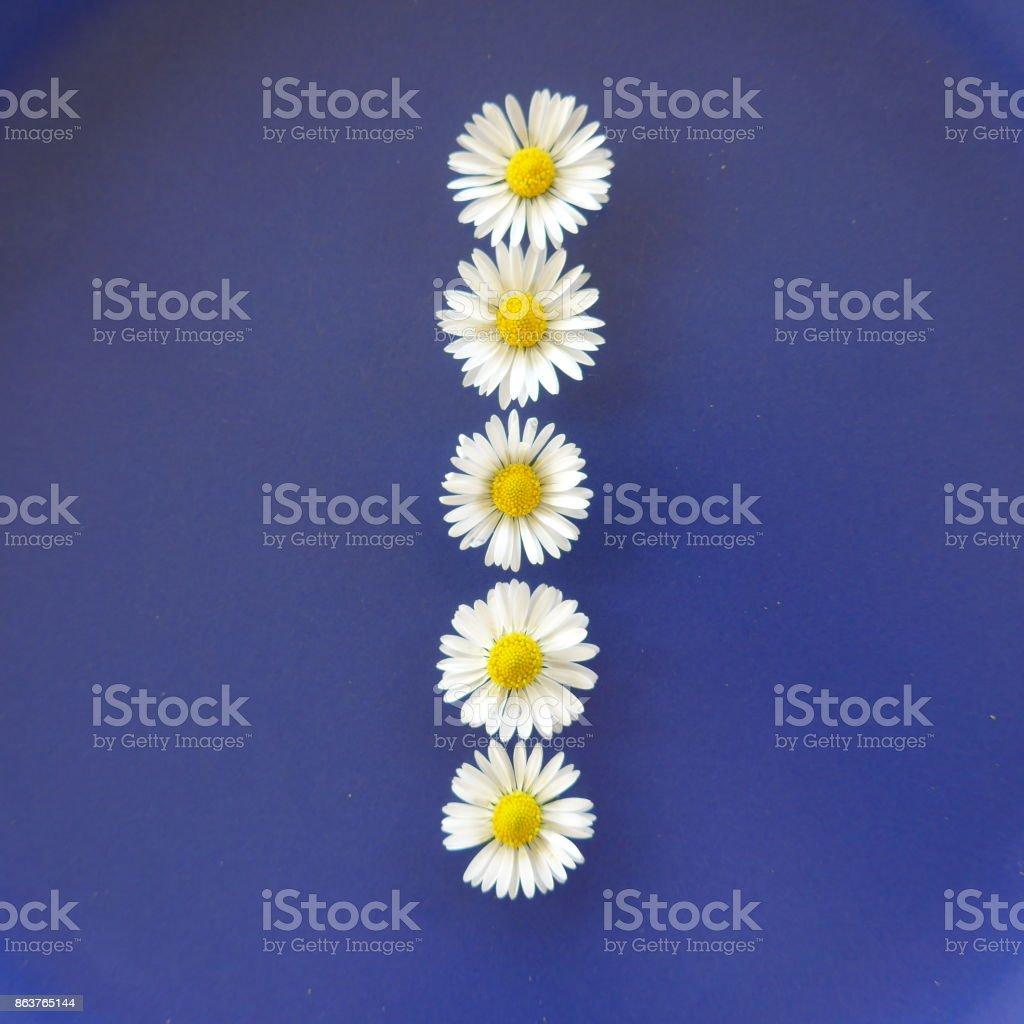 Upper case letter from white flowers called daisies on blue upper case letter from white flowers called daisies on blue background royalty free mightylinksfo