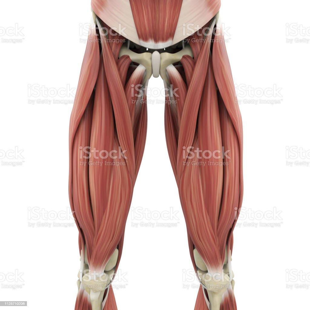 Atrofia cutânea induzida por glicocorticóide