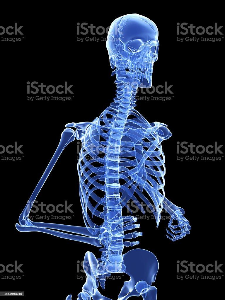 En La Parte Superior Del Cuerpo Del Esqueleto - Fotografía de stock ...