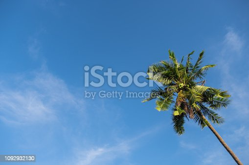 1145102719 istock photo Uprisen angle of beautiful high alone coconut tree with blue sky. copy space and Image 1092932130