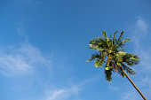 Uprisen angle of beautiful high alone coconut tree with blue sky. copy space and Image