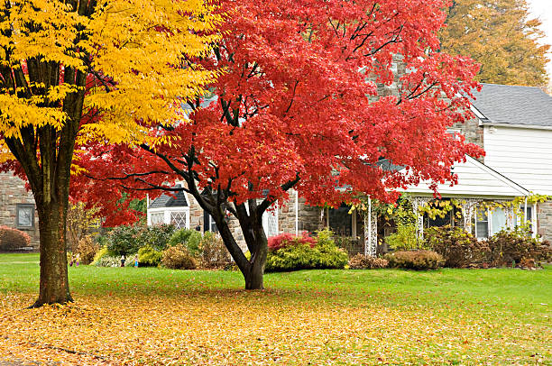 Upscale house and front lawn in autumn colors. stock photo
