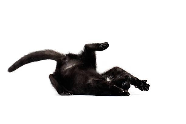 Upside down black cat at defence picture id185005457?b=1&k=6&m=185005457&s=612x612&w=0&h=tzuqi6s8glmbamsy67z7xjtjnxlynrp7wadfah2i0aa=
