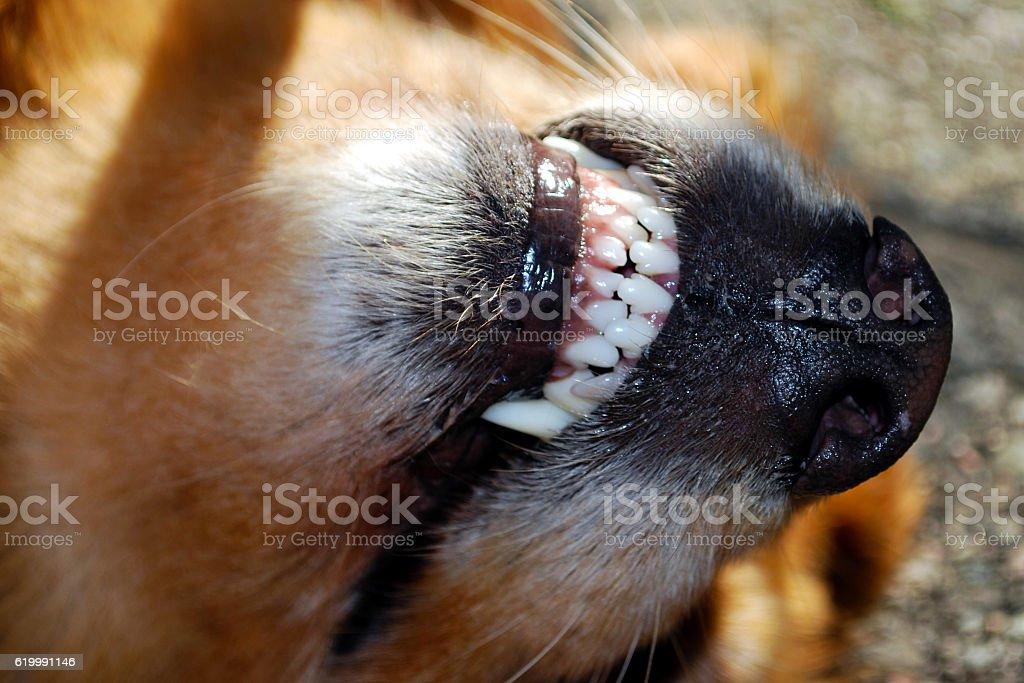 Upside down dog stock photo