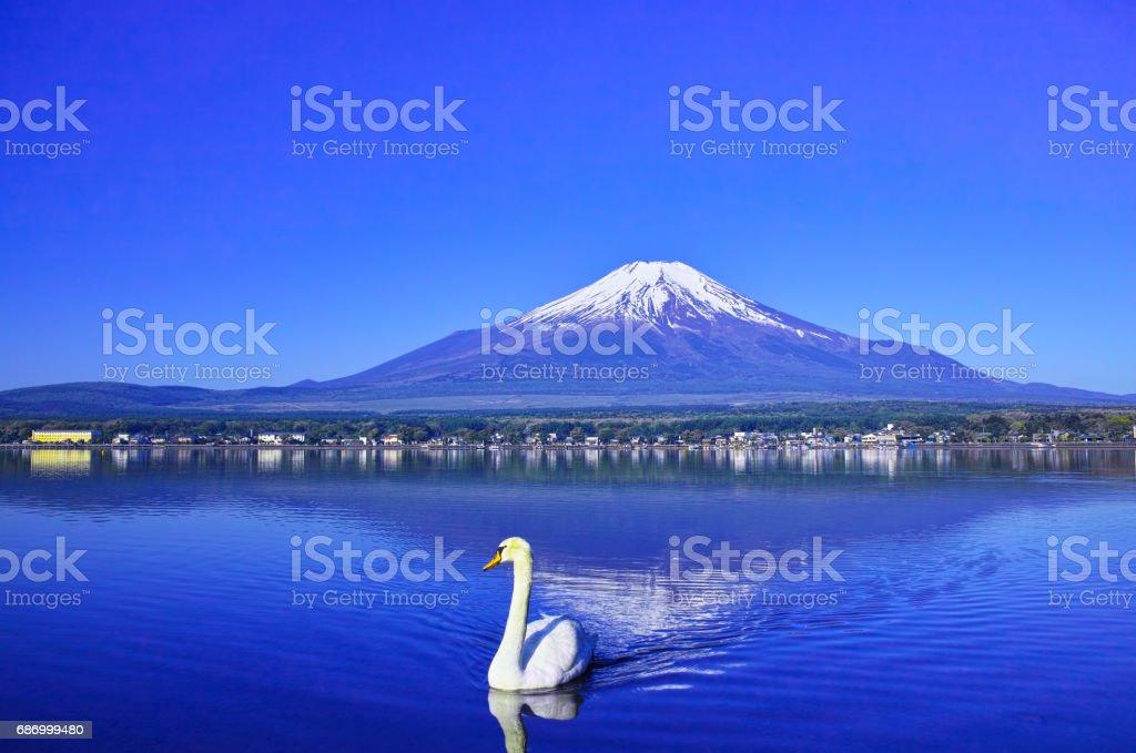 Upside-down Fuji und Schwan Lizenzfreies stock-foto