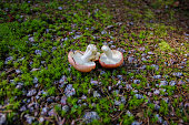 istock 2 upside down mushrooms on forest ground 1252838257