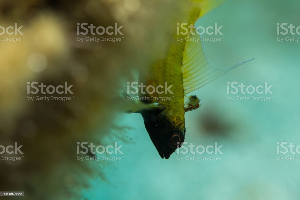 Upside down stock photo