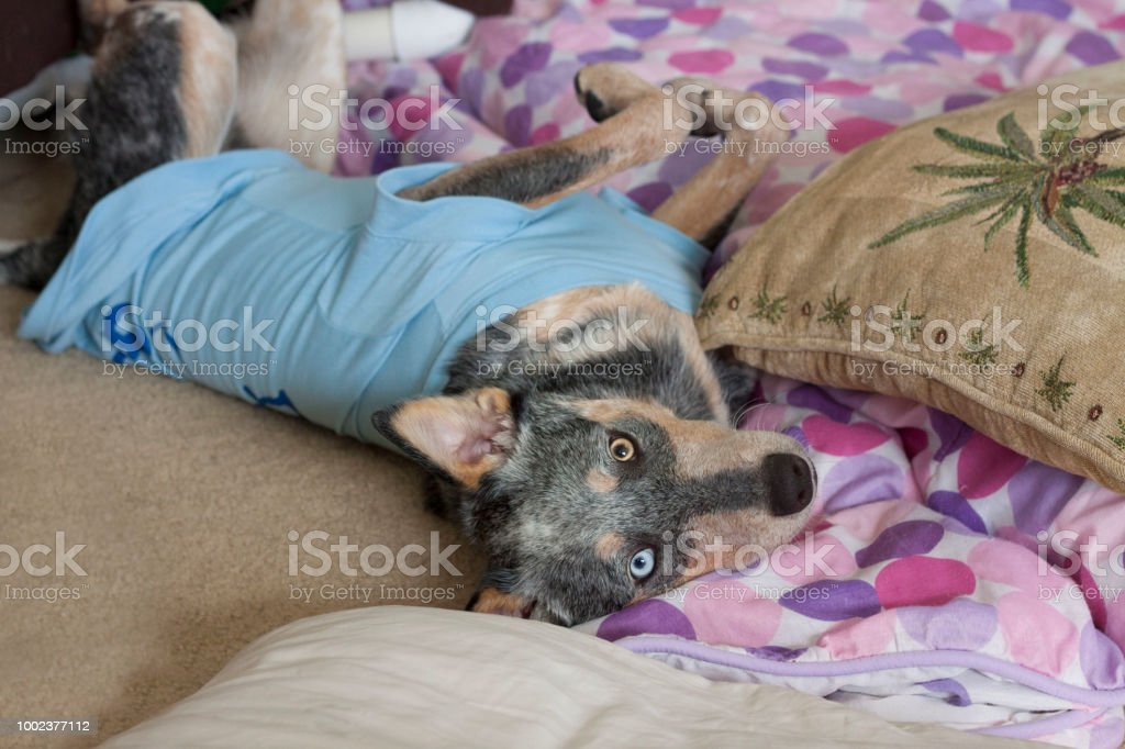 Upside down puppy stock photo