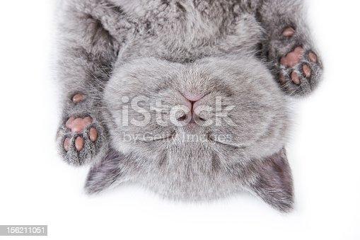 istock Upside down sleeping British kitten on a white background 156211051