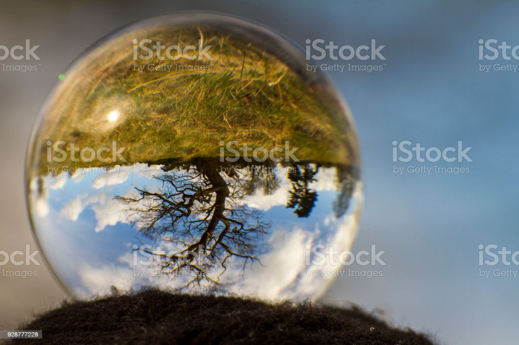 Upside down tree in crystal ball stock photo